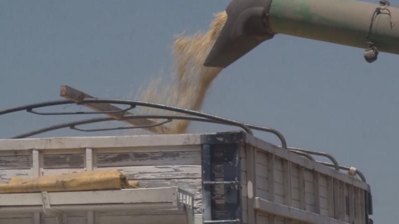 Piden productores que esquema de maíz vaya acompañada de subsidios