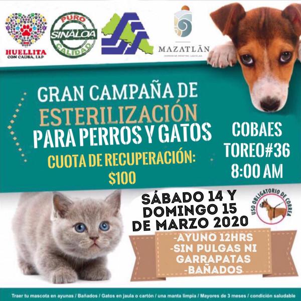 Habrá campaña masiva de esterilización de mascotas este fin de semana