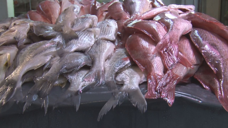 A la baja, ventas de pescados y mariscos en el Garmendia