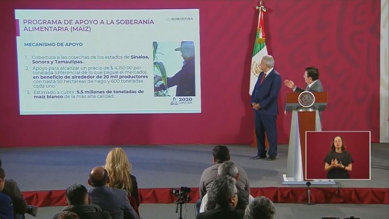 Garantiza el Gobierno federal 4 mil 150 pesos por tonelada de maíz de Sinaloa para mas de 20 mil productores