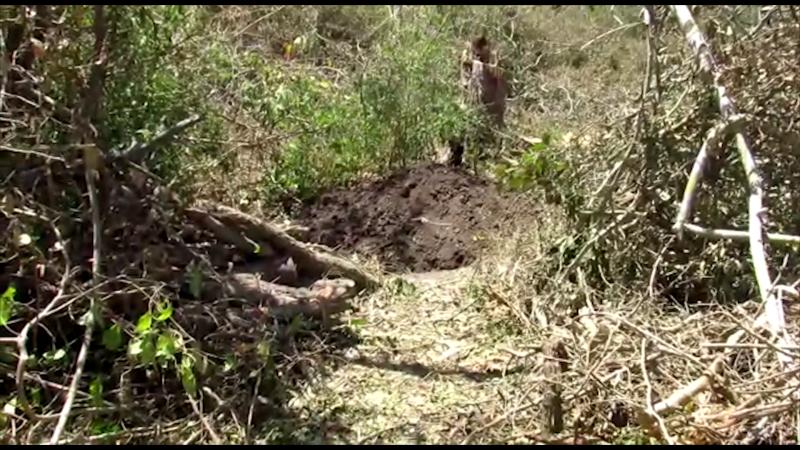 Rastreadoras localizan fosa con restos humanos