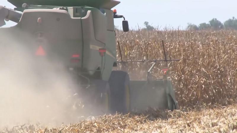 Piden a productores no reunirse durante las labores de trillas de maíz