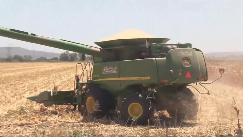 Los productores de maíz ya pueden iniciar la contratación de sus cosechas