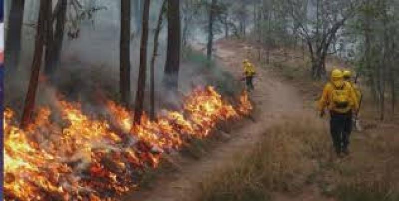 Se registran 61 incendios forestales activos en 20 estados del país