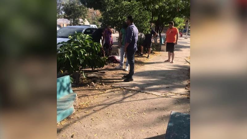 Envenenan animales en varias colonias de Mazatlán