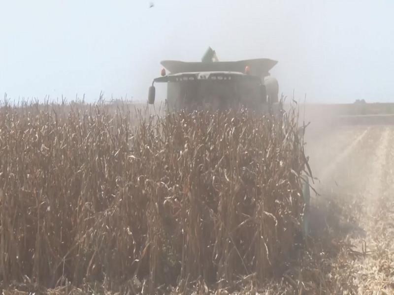 Es compromiso de Segalmex garantizar un precio de 4 mil 150 pesos por tonelada de maíz: Tarriba