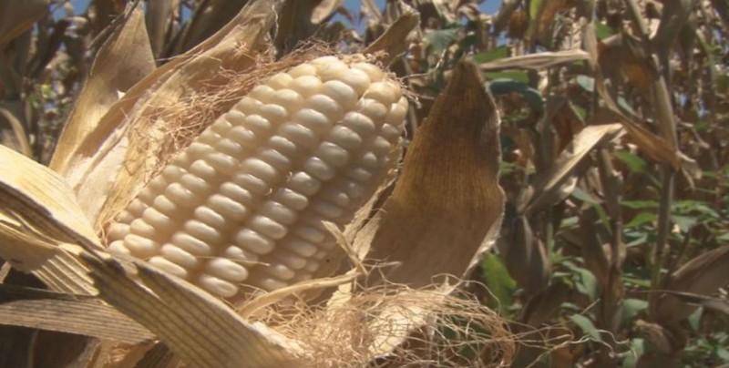 Soberanía alimentaria es uno de los desafíos a enfrentar
