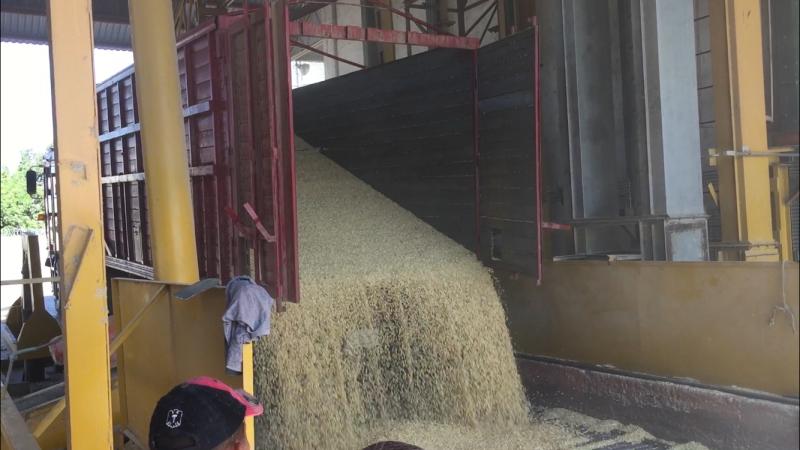 Exhortan a contratar maíz para recibir el apoyo de 289.60 pesos por tonelada