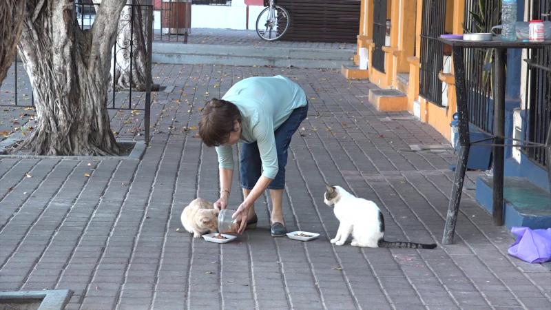 Labor altruista para gatos