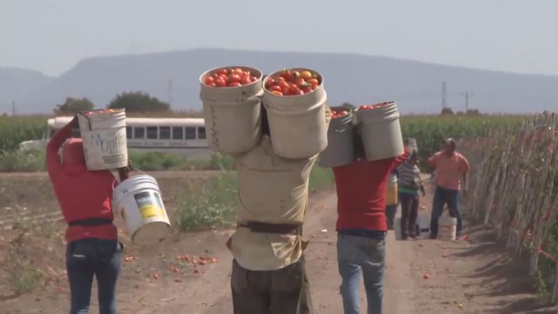 Preocupa el desempleo que habrá de generarse al finalizar la temporada hortícola