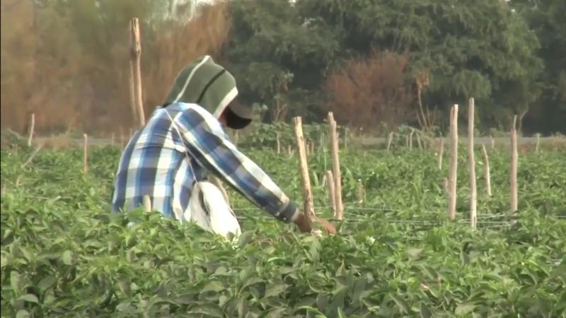 ¡A proteger a jornaleros agrícolas contra el COVID-19!
