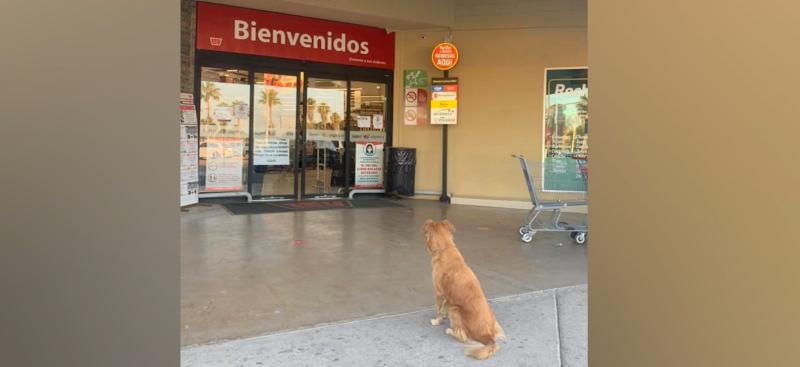 Como de película, fiel perrita espera a su dueña