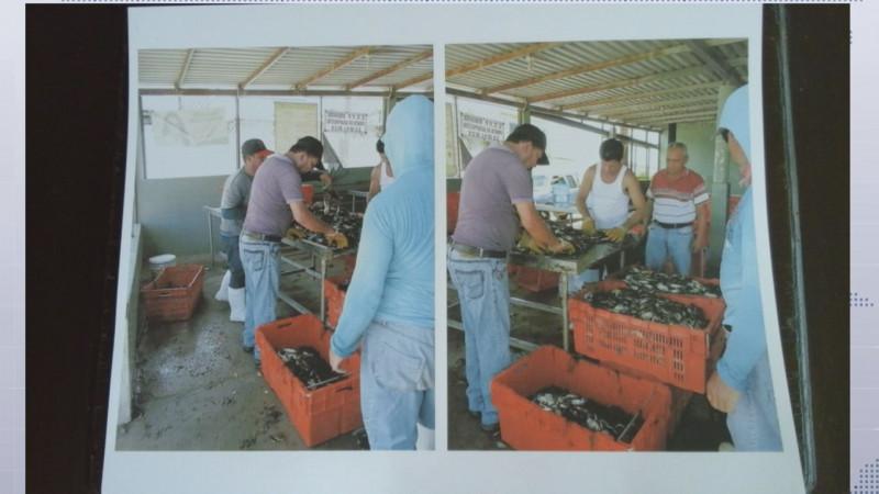Adelantarán el inicio de la temporada de captura de jaiba en Sinaloa