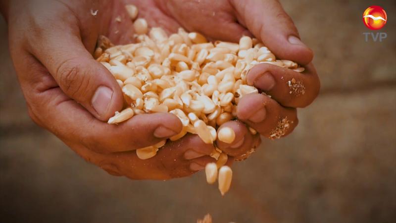 Productores agrícolas han recibido apoyos de parte de SADER