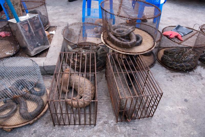 ¡Al fin! Wuhan, ciudad donde nació el Coronavirus, prohíbe la caza, venta y consumo de animales salvajes