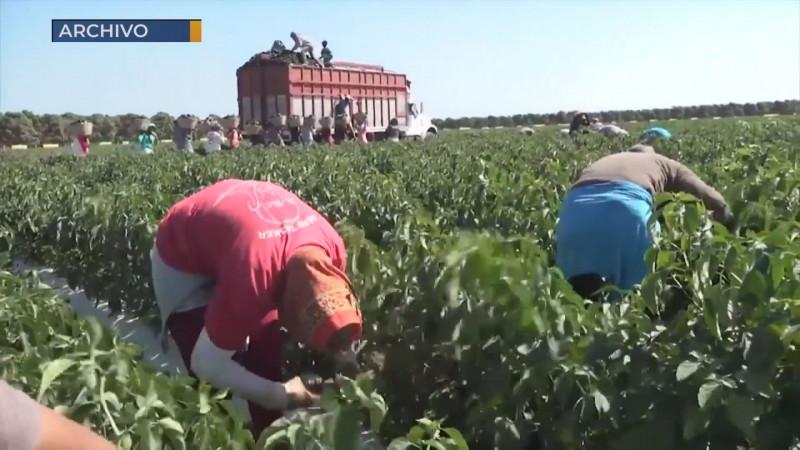 Finaliza la temporada hortícola en Sinaloa sin jornaleros contagiados: AARC