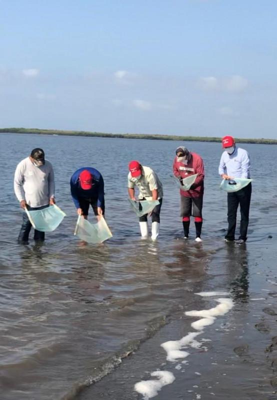 Inicia el programa estatal de rescate de larva de camarón
