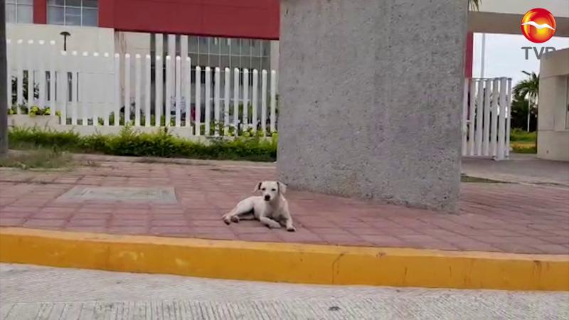 Perrita espera a su dueño afuera del Hospital General de Mazatlán