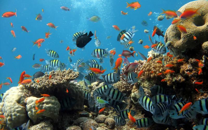 ¿Conoces la importancia de los Océanos?