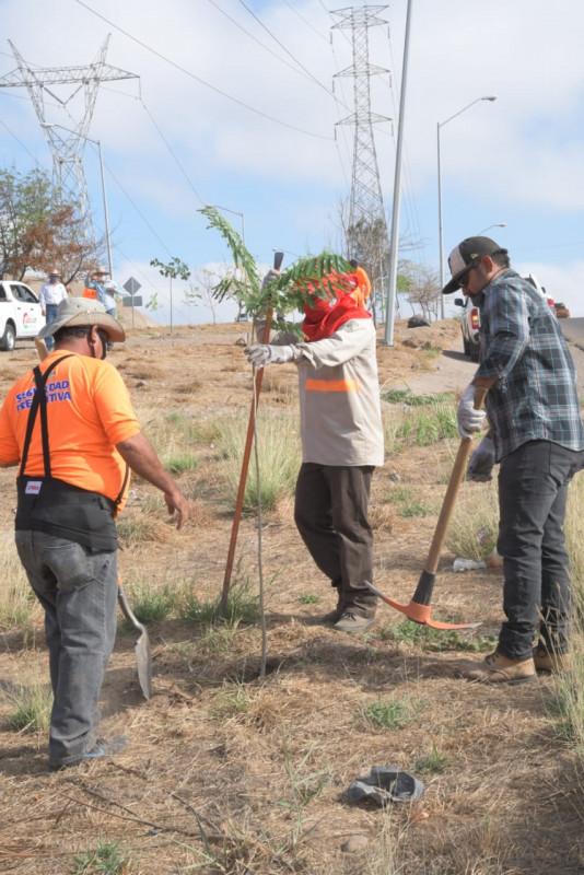 Reforestan más de 300 árboles por la Obregón