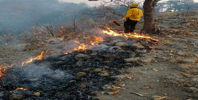 Atiende SEMARNAT 6 incendios forestales en el pais