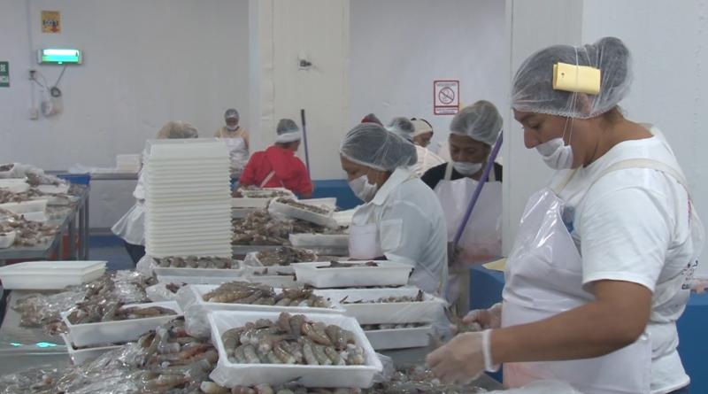 Disminuye 1.2% el número de trabajadores en Sinaloa en el mes de mayo