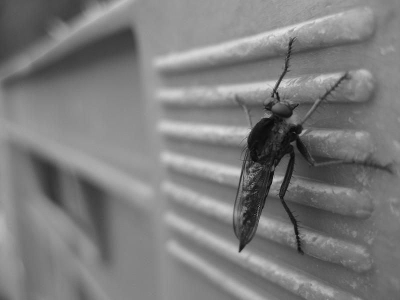 Un nuevo zika africano podría desatar una epidemia en Brasil