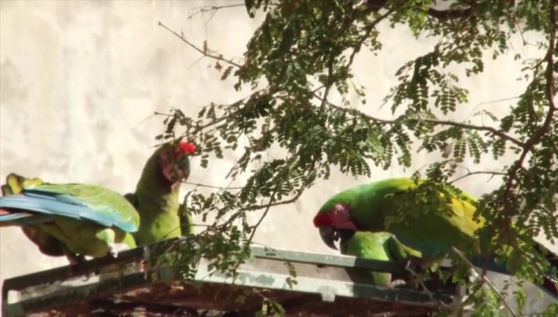 Sigue operando Reserva Ecológica de la UAS, en Cosalá