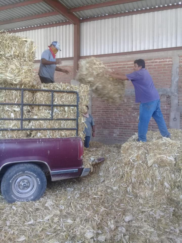Apoyan a ganaderos para hacer frente a sequía