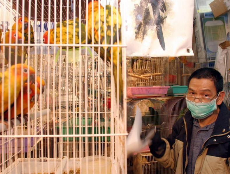 China también cerrará sus mercados que vendan aves vivas