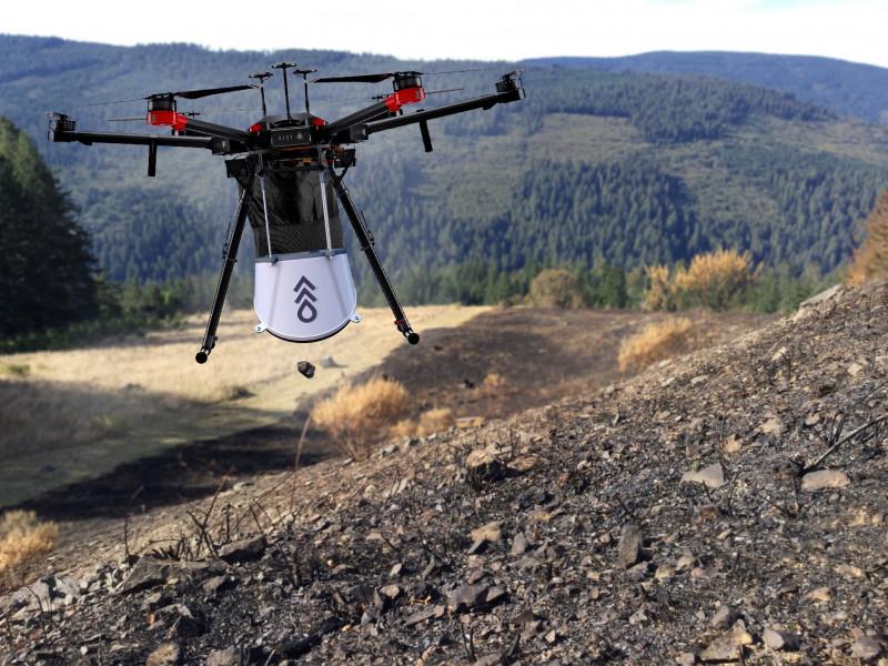Con drones plantarán millones de árboles