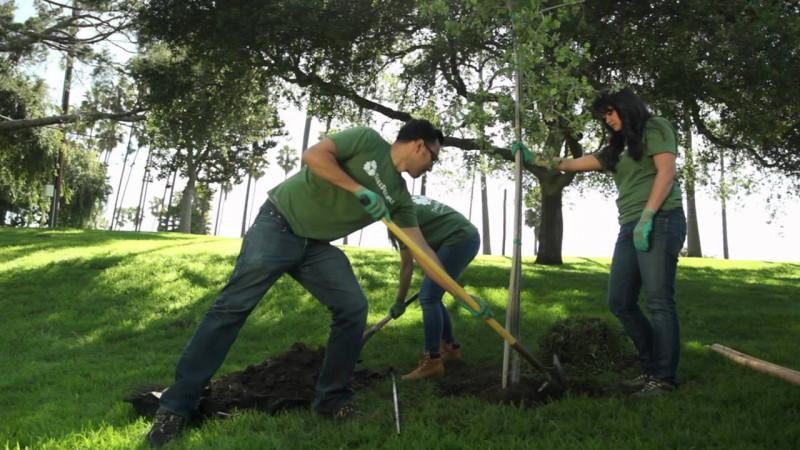 Ámsterdam plantará un árbol por cada bebé nacido en la ciudad
