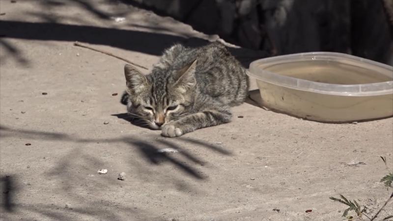 Bienestar animal en Mazatlán