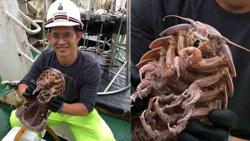 Aparece cucaracha gigante en Indonesia