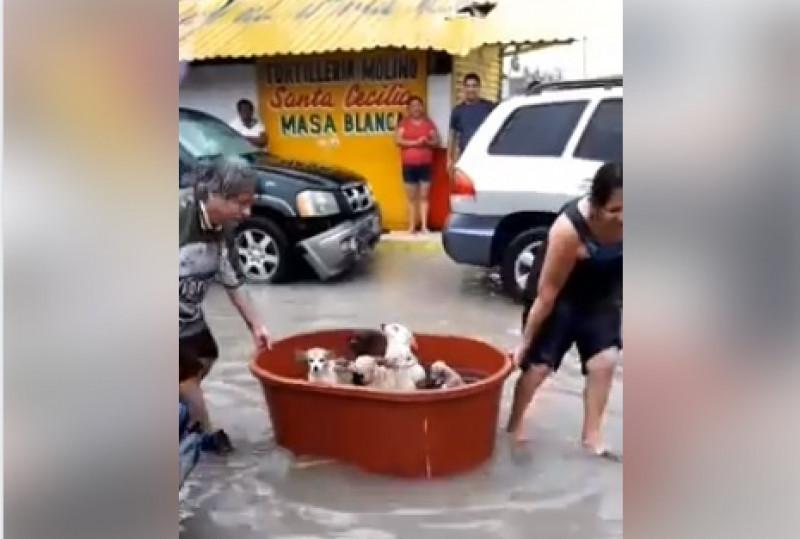 """Familia pierde todo por el huracán """"Hanna"""", pero salva a sus perritos en una bañera"""