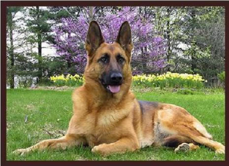 """""""Buddy"""", el primer perro que ha fallecido por Covid-19"""