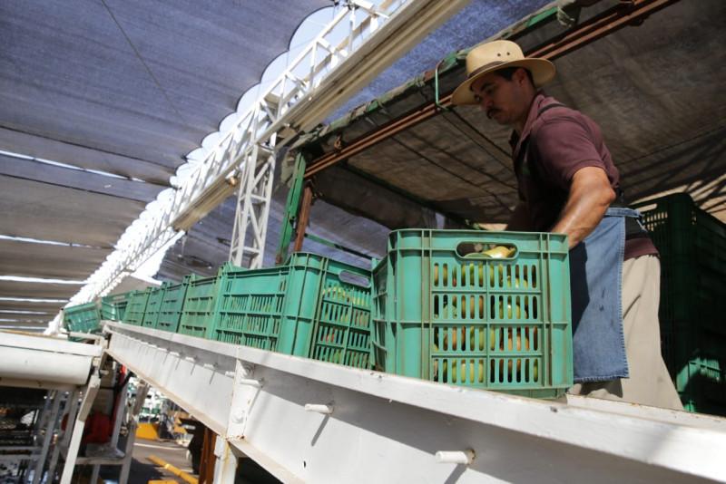 Sinaloa, 10°lugar nacional en el Indicador Trimestral de la  Actividad Económica