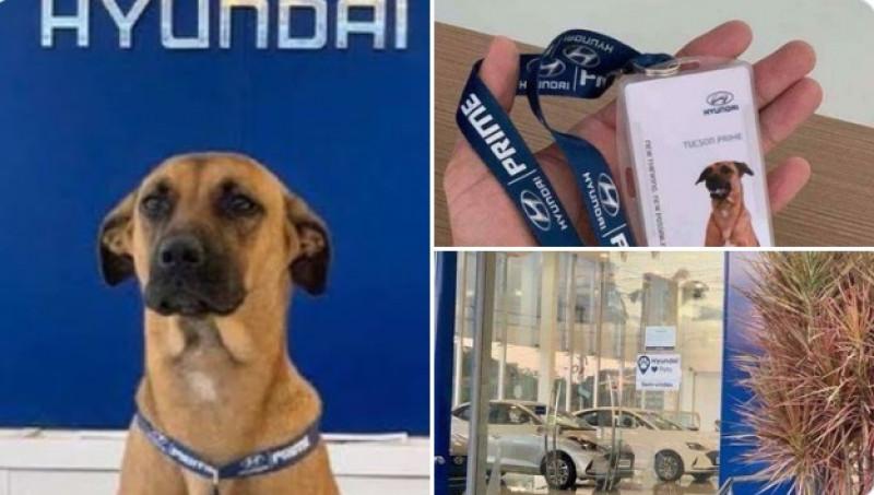 Perrito encuentra casa y empleo en agencia de autos