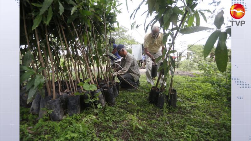 Se unen para arborizar la zona rural de Mazatlán