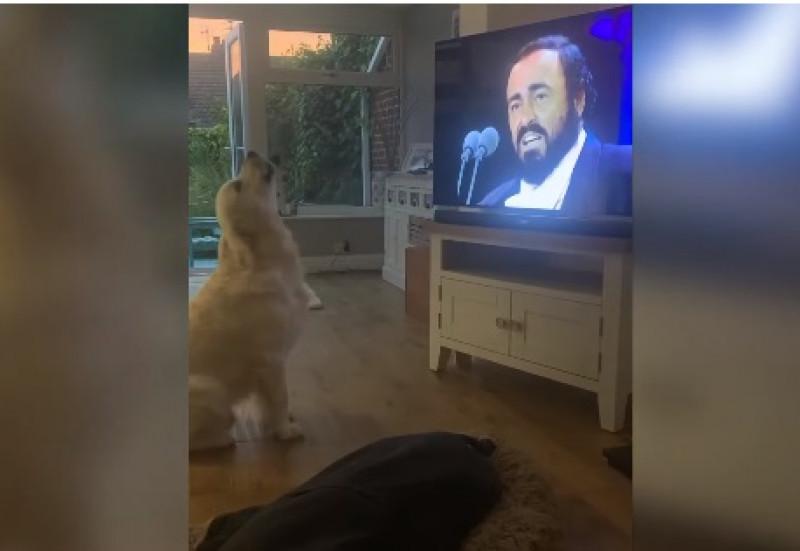 Este perro reaccionando a la ópera de Pavarotti es lo más tierno que verás hoy