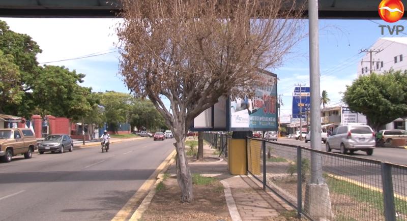 Ecología investigará motivo de árboles secos en avenida Ejército Mexicano