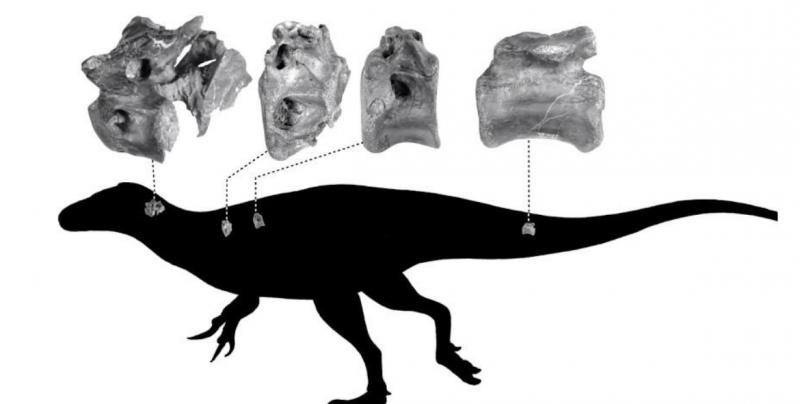 Descubren nueva especie de dinosaurio de hace 115 millones de años