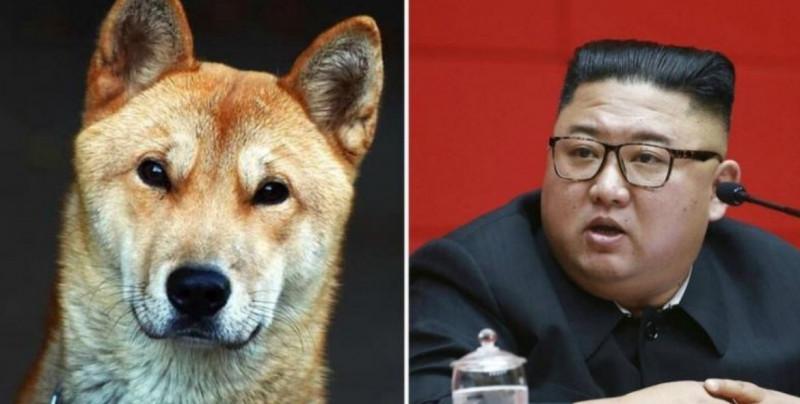 Corea del Norte confisca los perros de su población y aseguran que los venderán a carnicerías y restaurantes