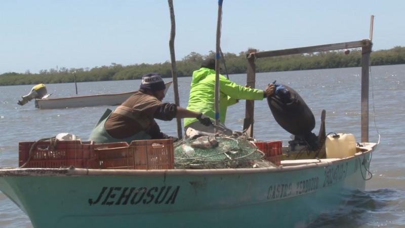 Pago inmediato de 20 mdp para empleo temporal pesquero