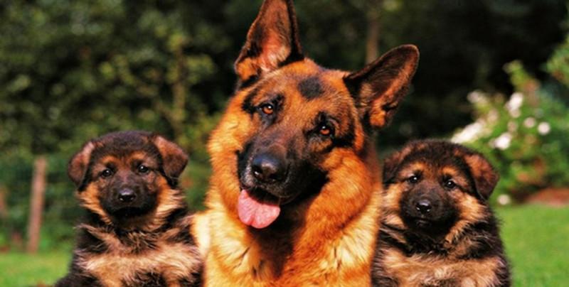 Alemania obligará a su población a que pasee sus perros dos veces por día