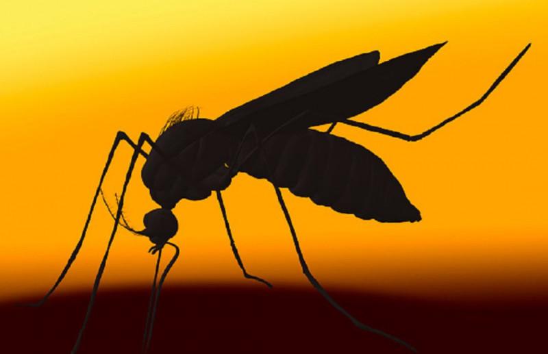 Florida liberará 750 millones de mosquitos genéticamente alterados para frenar el dengue y otras enfermedades