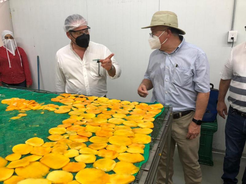 Inicia operaciones la planta deshidratadora de mango impulsada por la AARB