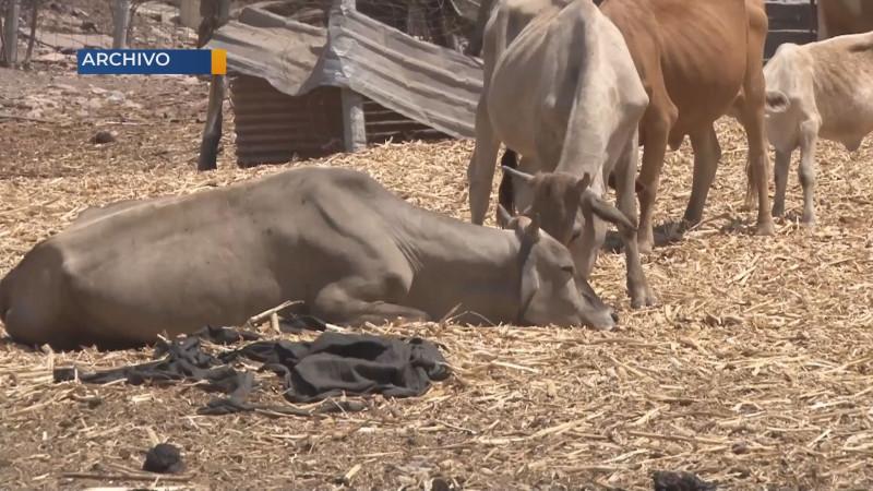 Desplazados por la violencia en Tepuche han perdido su patrimonio