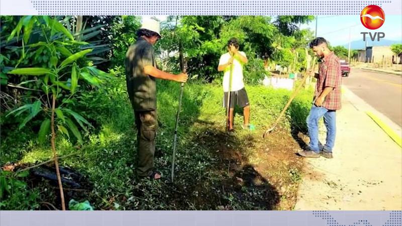 Ponen el ejemplo arborizando Mazatlán