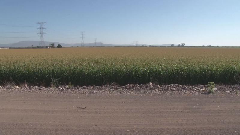 Agricultura comercial sin recursos del presupuesto federal 2021